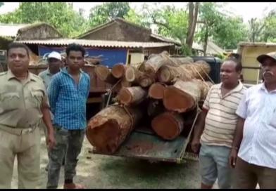 Large Quantity of sal wood seized in Nilagiri
